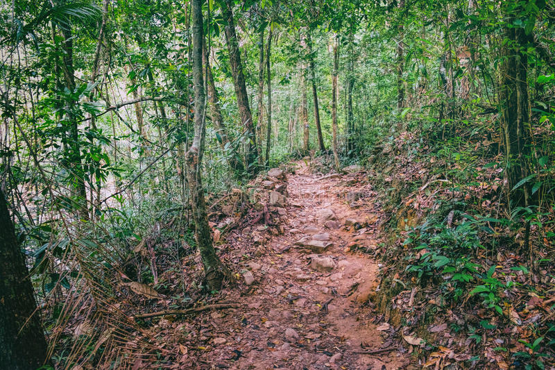Walking trail in Thai tropical forest. stock images