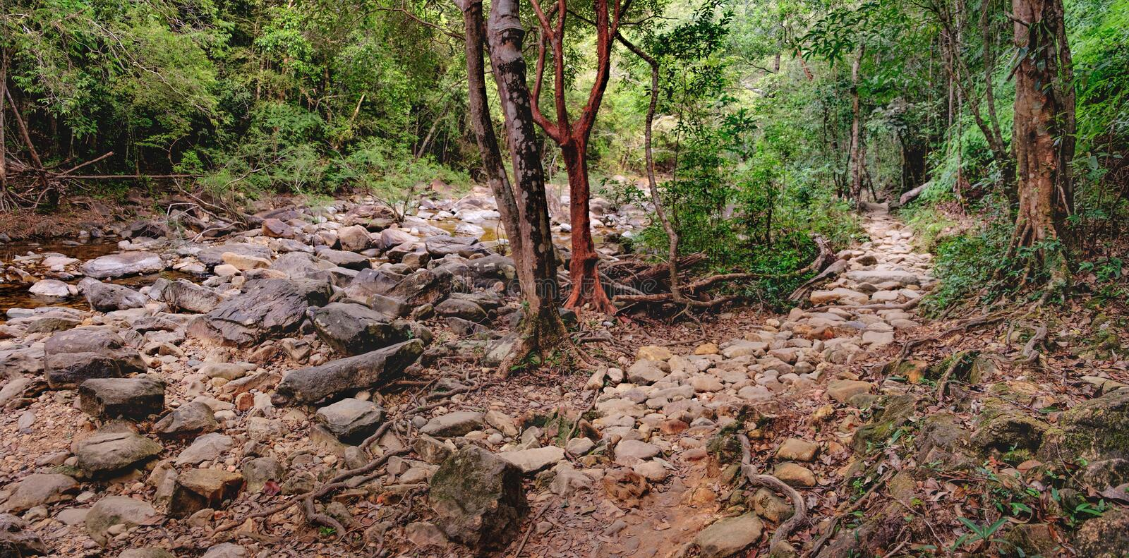 Walking trail in Thai tropical forest. royalty free stock photos
