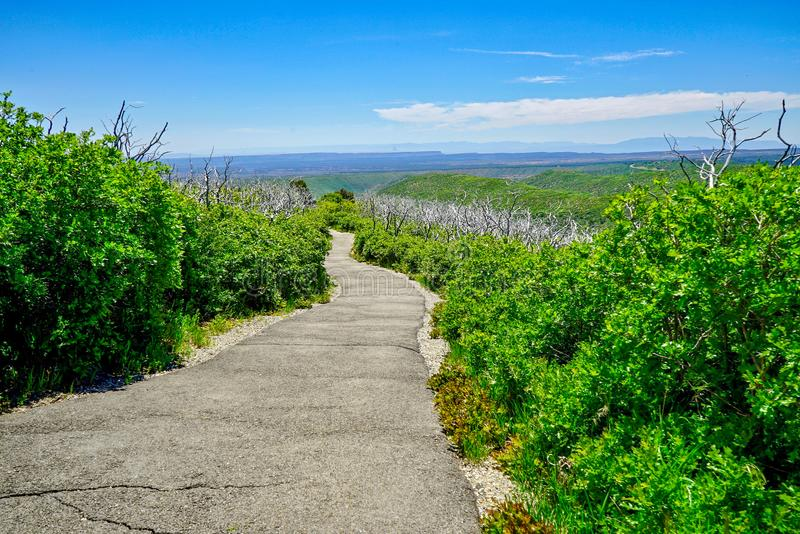 Walking Trail on Top of Colorado Mountain royalty free stock image