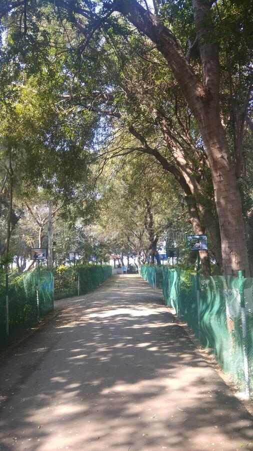 Walking trek and light and shade patterns in a public park royalty free stock photos