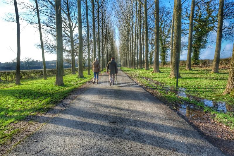 Walking. Walkers hiking hikers old age senior seniors couple rambler ramblers rambling retired pensioners grandparents old age aged trees road path footpath royalty free stock photography