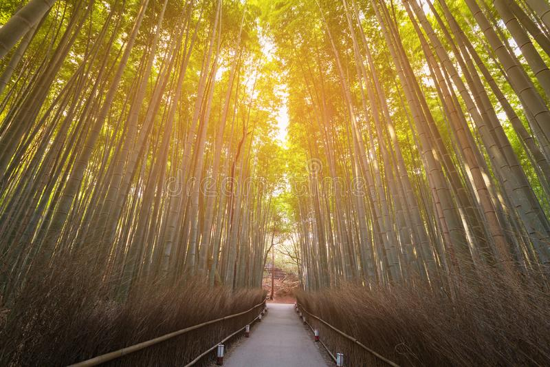 Walking way over Bamboo forest Kyoto Japan stock photography