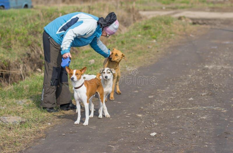 Walking woman with basenji dog stroking stray canine nursing mother royalty free stock photo