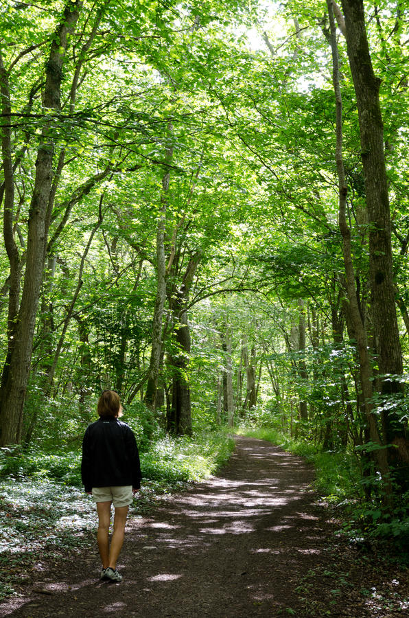 Download Walking woman in forest stock image. Image of beautiful - 26390155