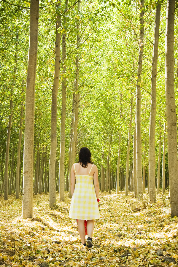 Walking on woods stock photography