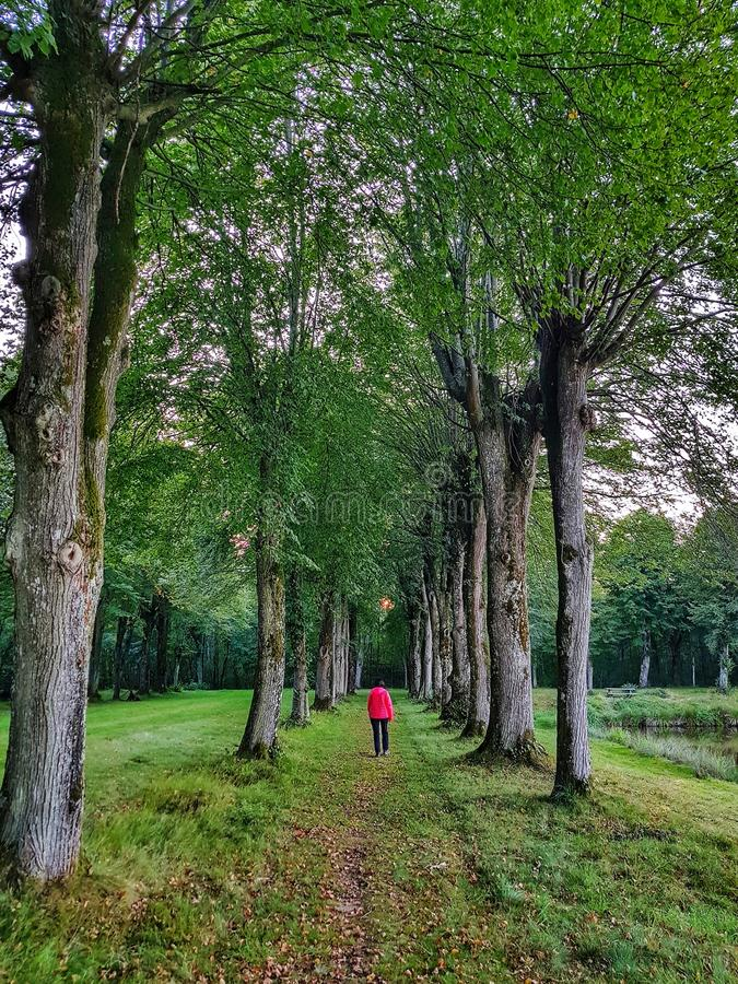 Walking in the woods royalty free stock image