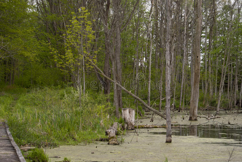 Walking through the woods stock photos