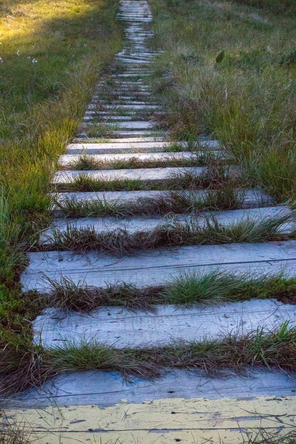 Walkpath de madera resistido con la hierba en camino de madera vacío del bosque en perspectiva Viejo camino rural Concepto de la  fotos de archivo