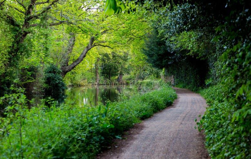 Walkpath nos canais de água em Surrey O tempo de mola… aumentou as folhas, fundo natural foto de stock royalty free