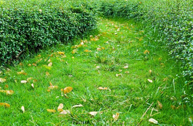 Download Walkway stock image. Image of nature, boraginaceae, natural - 24507405