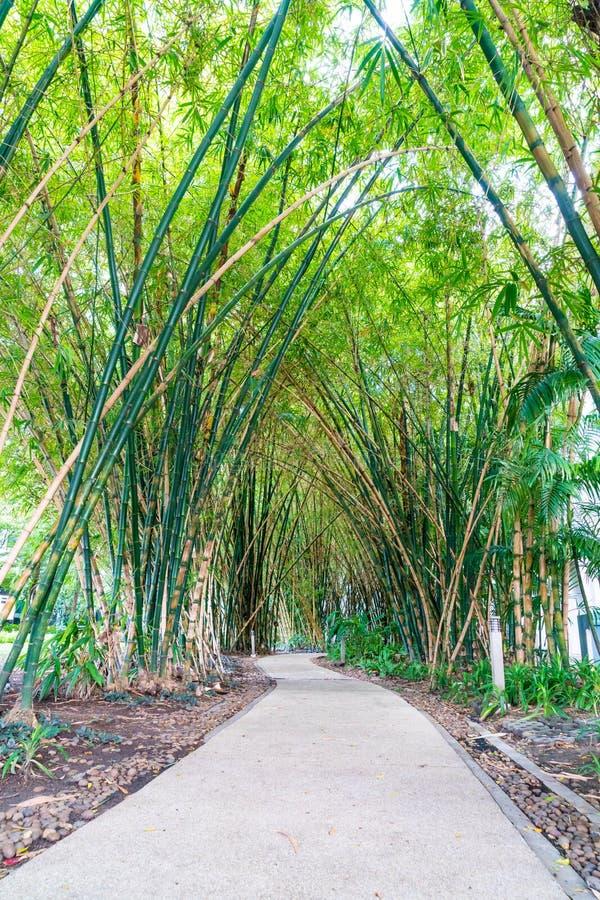 Walkway with bamboo. Garden in park stock photos