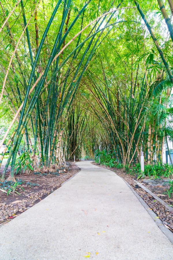 Walkway with bamboo. Garden in park royalty free stock photo