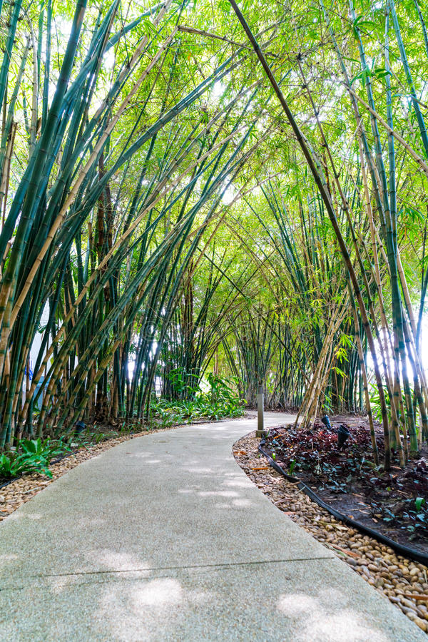 Walkway with bamboo. Garden in park royalty free stock photos