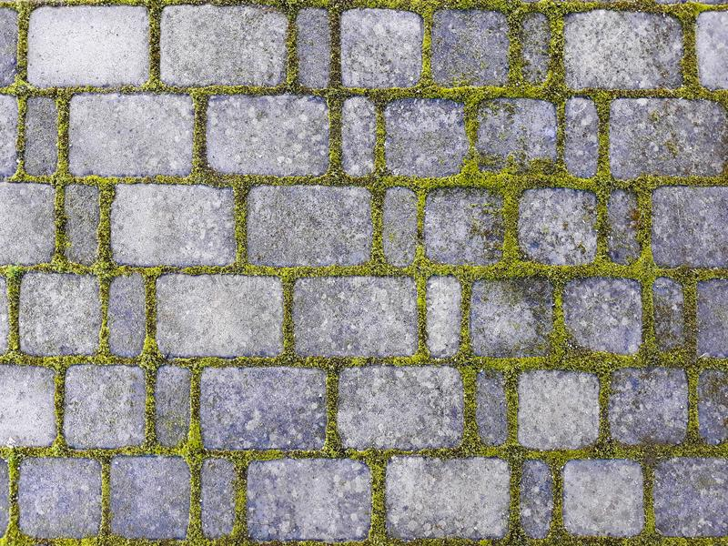 a walkway cement floore tiles with moss and grass.stone walkway stock photo