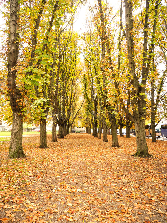 Walkway cover with yellow maple leaves fall stock photos