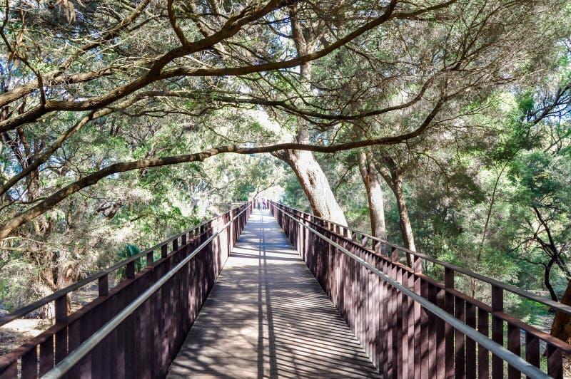 Walkway di re del Park Elevated immagini stock libere da diritti