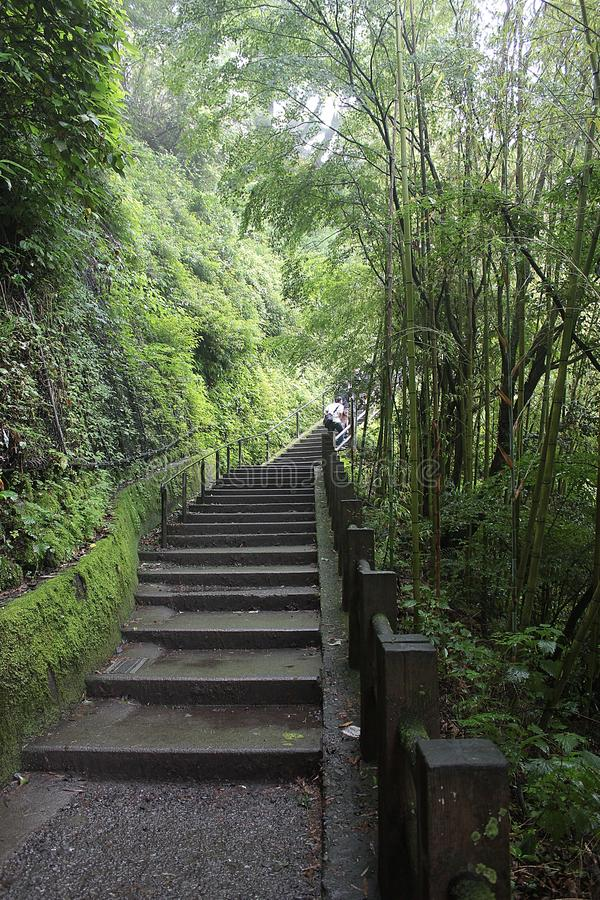 Walkway in the forest to step up to the mountain. royalty free stock photography