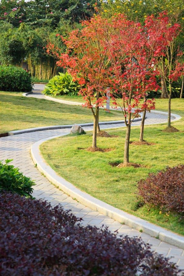 Download Walkway in garden stock image. Image of park, beautiful - 12295815