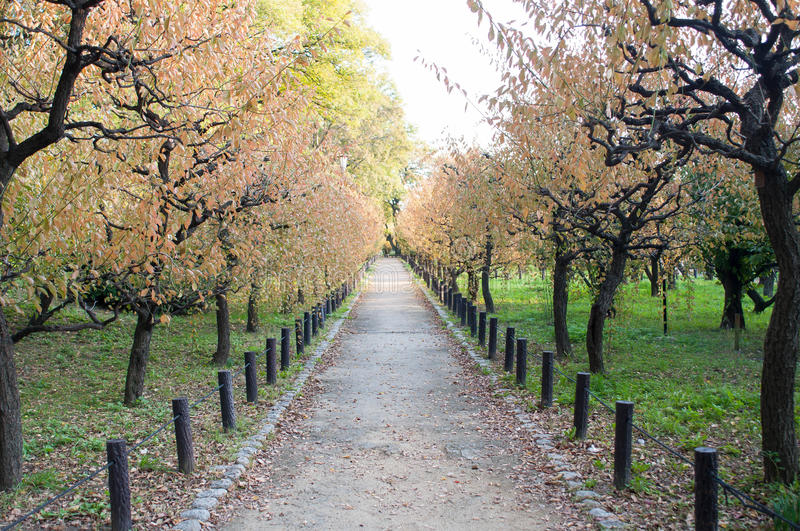 Download Walkway stock photo. Image of landscape, scenic, color - 57969880