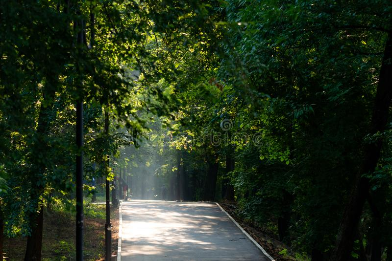 Walkway Lane Path With Green Trees in city park. Beautiful Alley In Park. Shadow, landscape, nature, season, forest, summer, background, foliage, light, dark stock image
