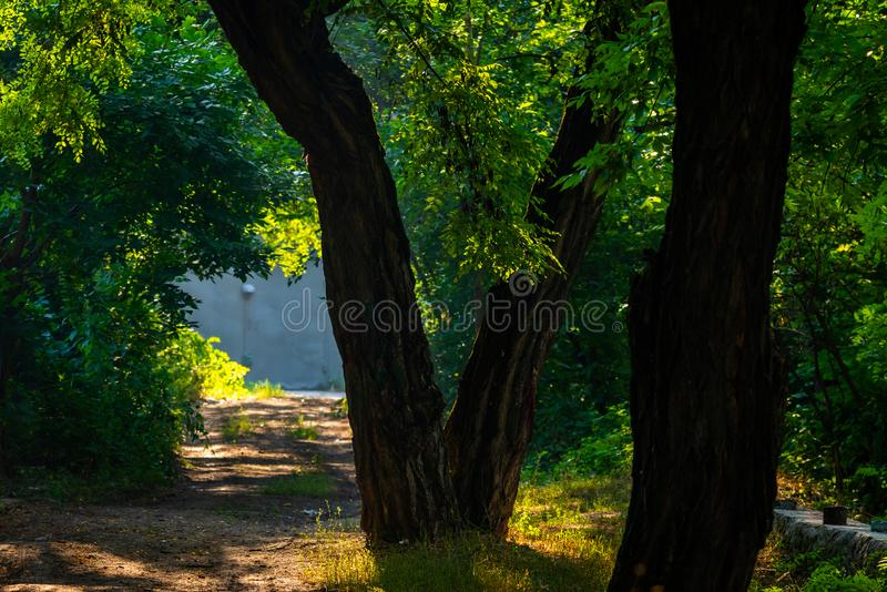 Walkway Lane Path With Green Trees in city park. Beautiful Alley In Park. Shadow, landscape, nature, season, forest, summer, background, foliage, light, dark royalty free stock photos