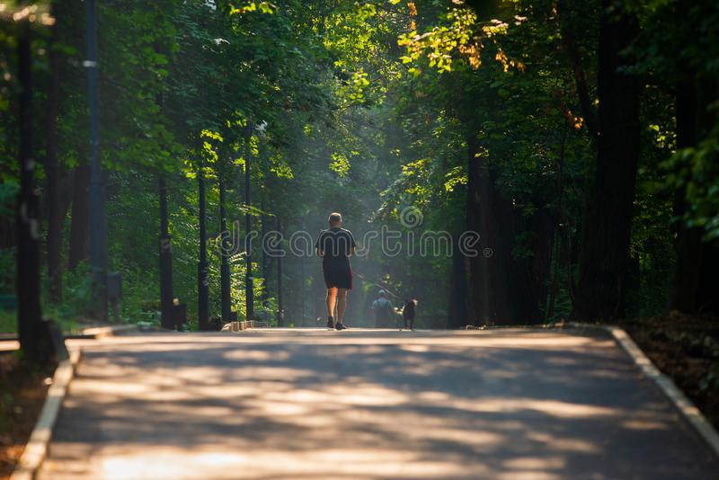Walkway Lane Path With Green Trees in city park. Beautiful Alley In Park. Man, dog, walking, shadow, landscape, nature, season, forest, summer, background royalty free stock images