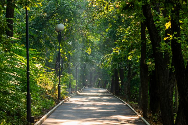 Walkway Lane Path With Green Trees in city park. Beautiful Alley In Park. Shadow, landscape, nature, season, forest, summer, background, foliage, light, dark royalty free stock image