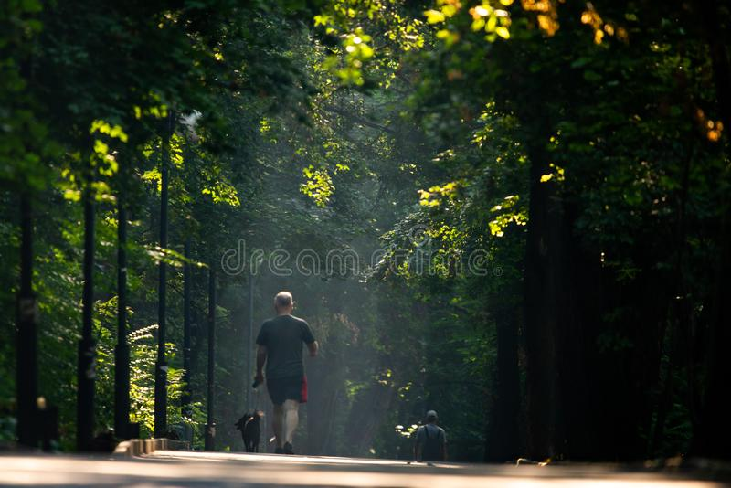 Walkway Lane Path With Green Trees in city park. Beautiful Alley In Park. Man, dog, walking, shadow, landscape, nature, season, forest, summer, background stock image
