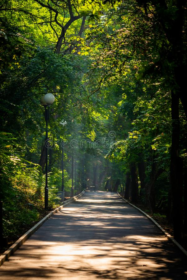 Walkway Lane Path With Green Trees in city park. Beautiful Alley In Park. Shadow, landscape, nature, season, forest, summer, background, foliage, light, dark royalty free stock images