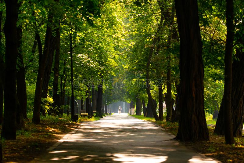 Walkway Lane Path With Green Trees in city park. Beautiful Alley In Park. Shadow, landscape, nature, season, forest, summer, background, foliage, light, dark stock images