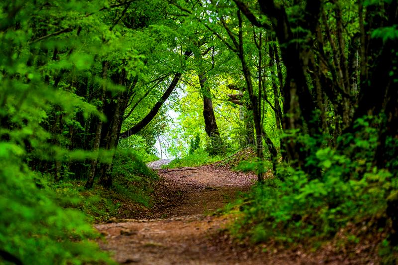Walkway Lane Path With Green Trees in Forest. Beautiful Alley, road In Park. Way Through Summer Forest stock photos