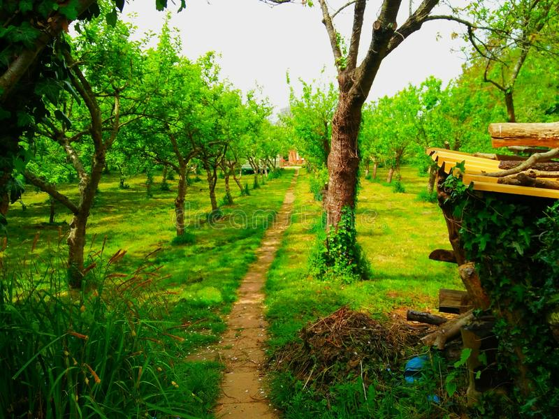 Walkway organic farm royalty free stock image