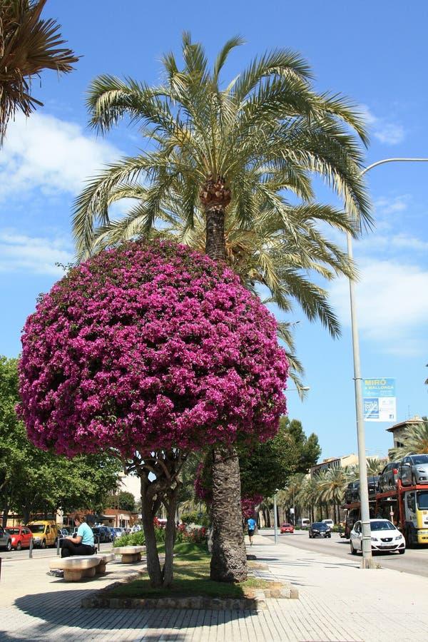 Walkway in Palma de Mallorca stock photography