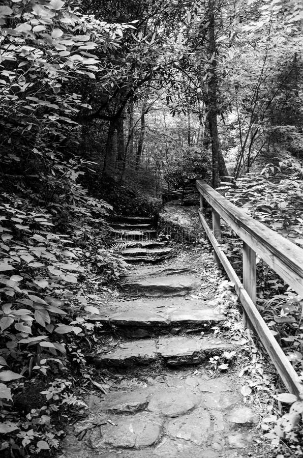 Walkway to Pearson Falls royalty free stock photography