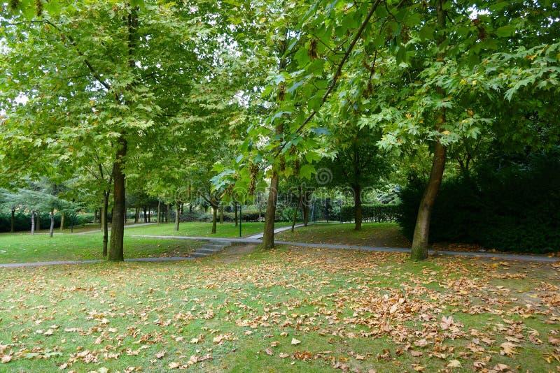Walkway among the trees in the park. Walkway among the green trees in the park stock images