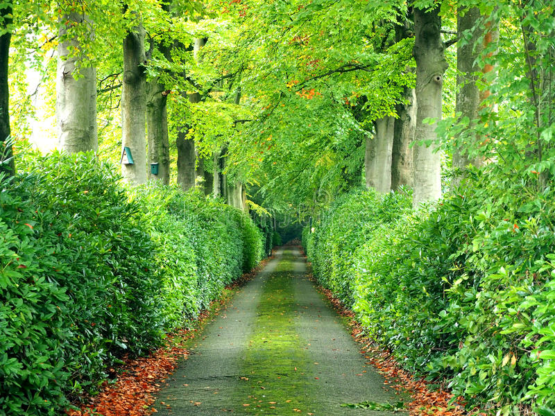 Walkway under a green tree natural tunnel royalty free stock image