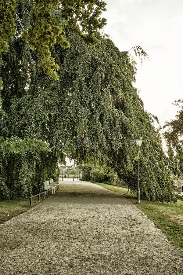 Walkway under an old big tree. Schwerin, Germany stock photos