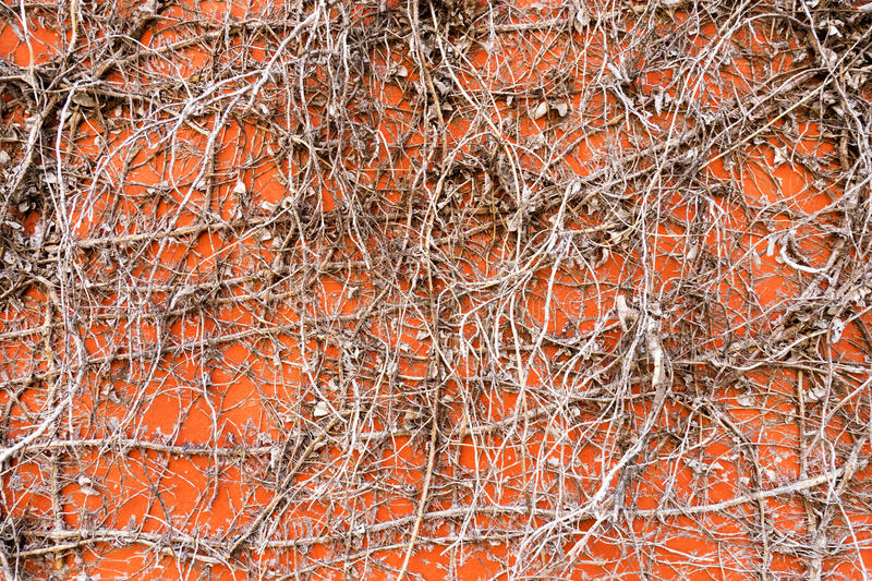 Wall3 arkivfoto