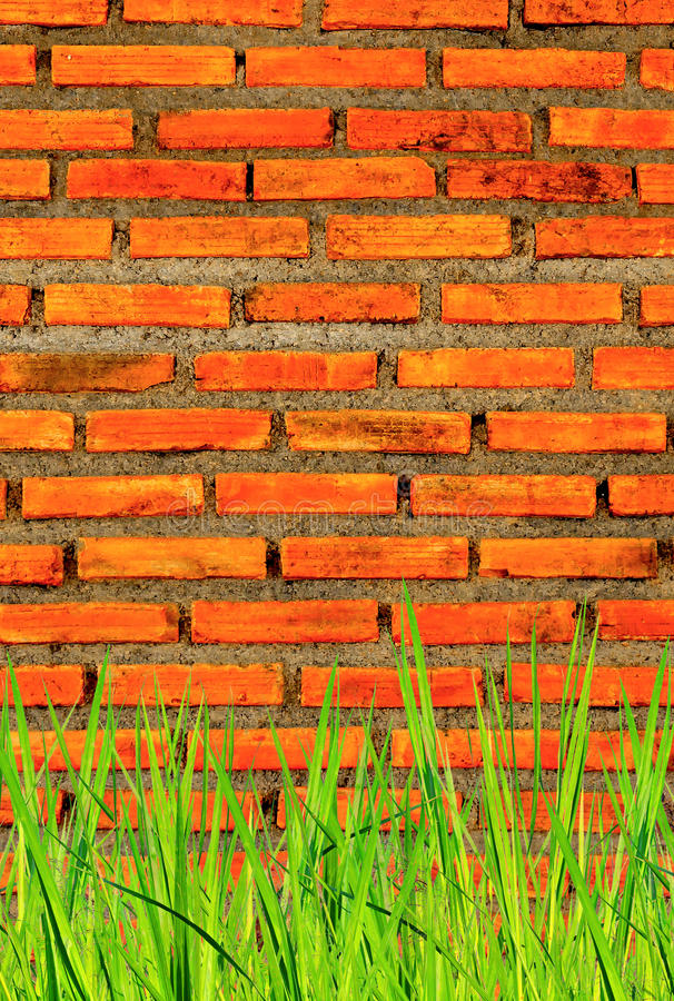 The wall from brick and brick background with grass on below, red brick and grass on below royalty free stock image