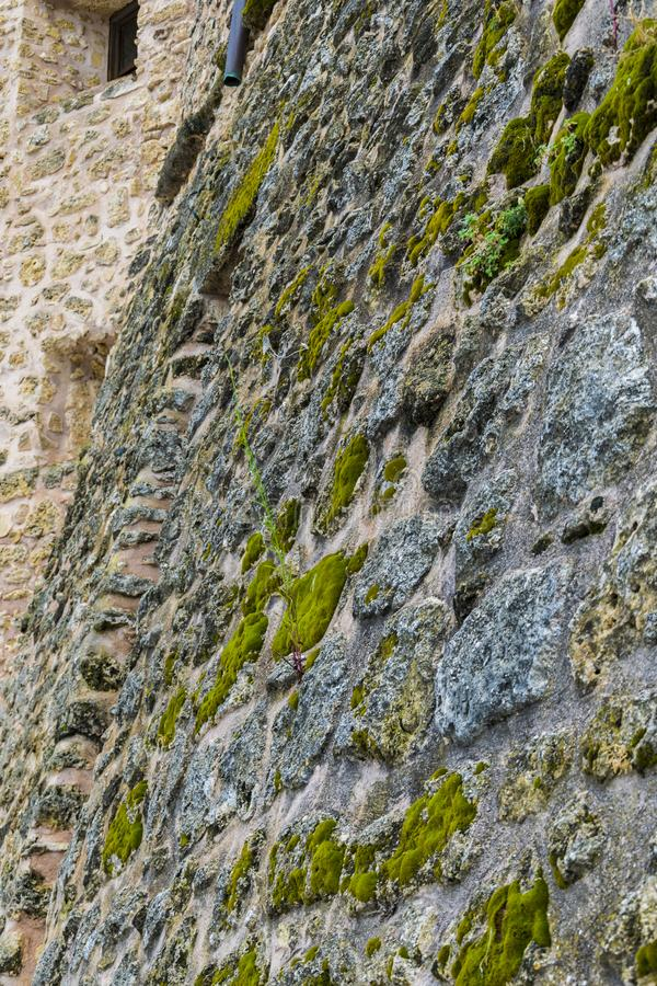 Old stone wall with green spots stock photos