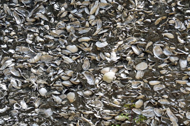 Wall of conquina shells, St. Augustine, Florida. Close up of wall made from conquina shells in historic St. Augustine, Florida, USA royalty free stock photography
