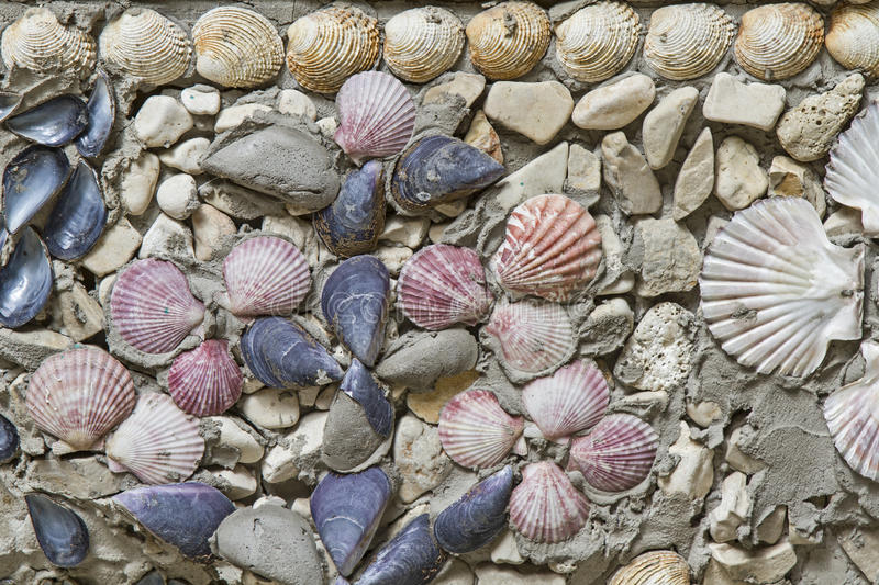 Wall decoration with shells royalty free stock photos