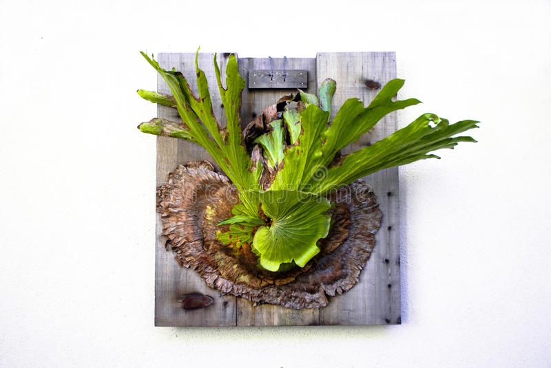 Wall Fern royalty free stock photography