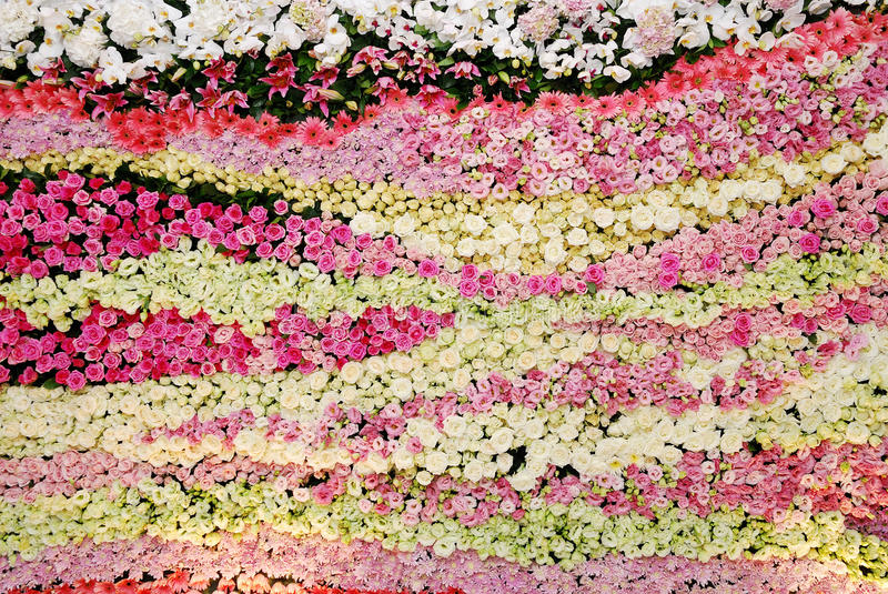 Wall flower stock images