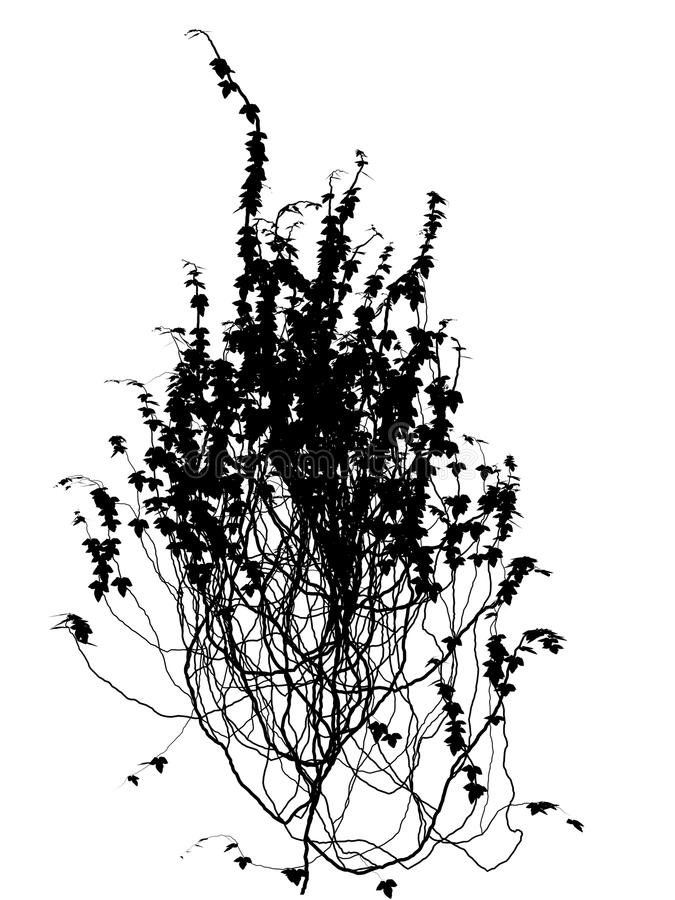 Free Wall Flower Creep Silhouette Outline Ivy Hedera Royalty Free Stock Photography - 23086987