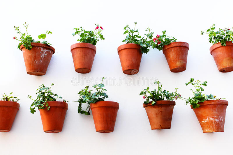 Download Flower pots stock photo. Image of colour, comfortableness - 29991156