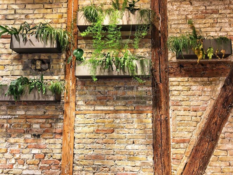 Wall, home decor, living room shelf, plants, modern, home,. WALL ILLUSTRATION FOR HOME DECOR stock photo