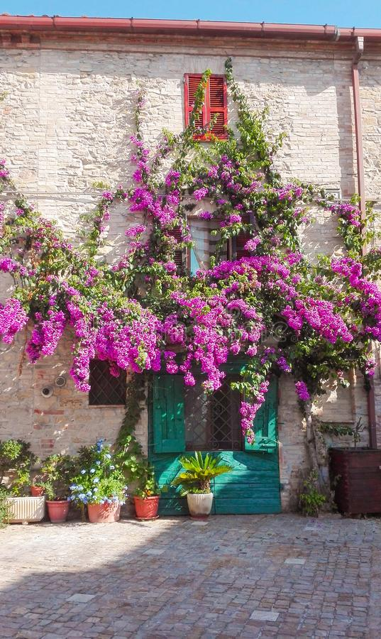 Wall of a house covered with colored Bougainvillea royalty free stock photo