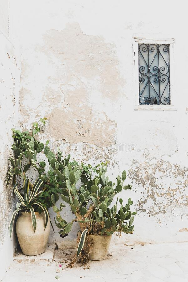 The wall of a house with small window and cacti in big clay pots stock photo