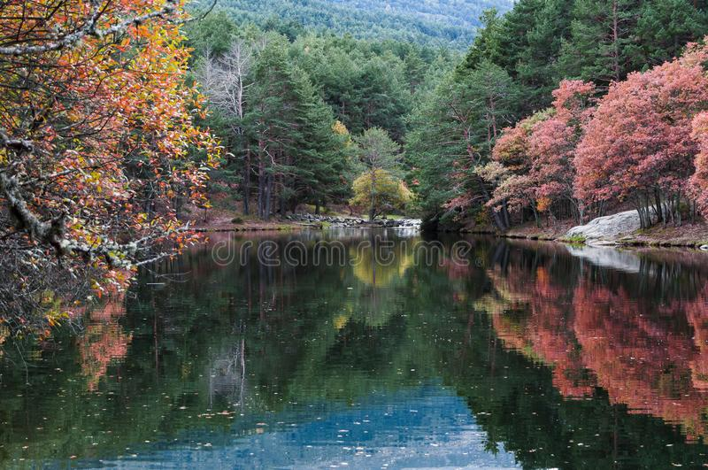 La Angostura Reservoir. Rascafría, Madrid, Spain. From the wall that limits the reservoir we can see this spectacular image of autumn in the mountains of royalty free stock photos
